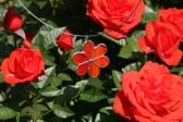 Kytička červená - Lesní sklo