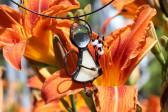 Andílek s růžovou kytičkou - Lesní sklo