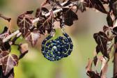 Modré náušnice - spirálka - Lesní sklo